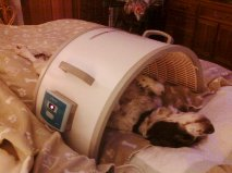 pet cancer infrared sauna